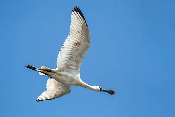 国际珍稀动物保护日丨珍稀鸟类知多少?