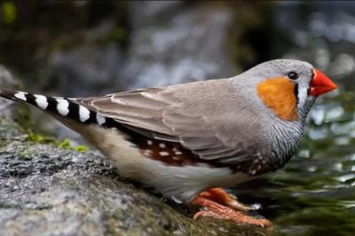 气候变暖竟导致鸟儿的体型缩水